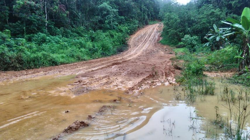 Salah satu ruas jalan Desa Kinipan yang terkena banjir
